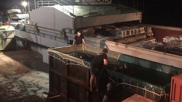 Трех косаток из китовой тюрьмы отправили на судне по Амуру к месту выпуска