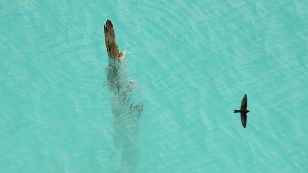 Отражение птицы в воде золоотвала Новосибирской ТЭЦ-5