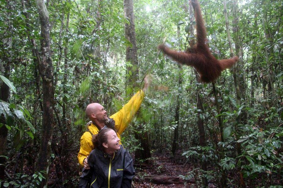 Получаем по шее от дикого орангутана, Калимантан