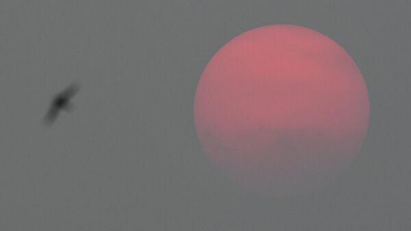 Солнце перед закатом в Новосибирске скрывается в смоге, вызванном лесными пожарами на территории Красноярского края