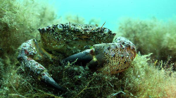 Подводный мир полуострова Крым