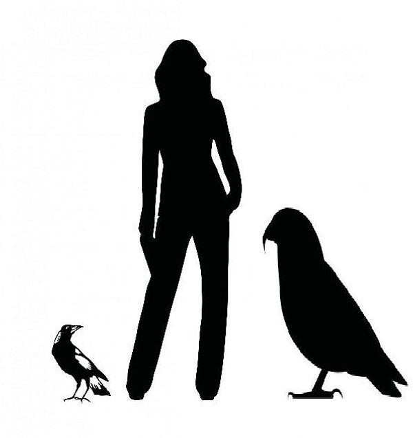 Попугай-геракл, человек и сойка