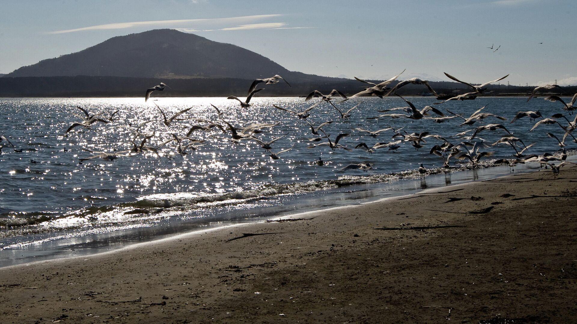 1557244165 0:154:2947:1812 1920x0 80 0 0 a089ca41d1797c32e90ab4f563062153 - Власти прокомментировали сообщения о выбросах морских животных на Курилах
