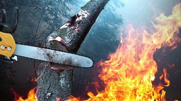 Лесорубы сжигают Сибирь: незаконный промысел за дымовой завесой