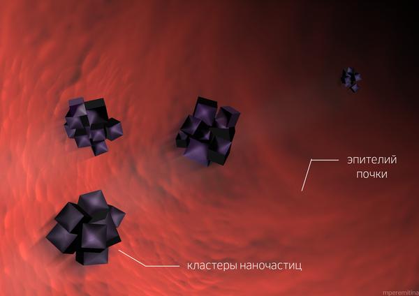 Иллюстрация. Выведение наночастиц через почки
