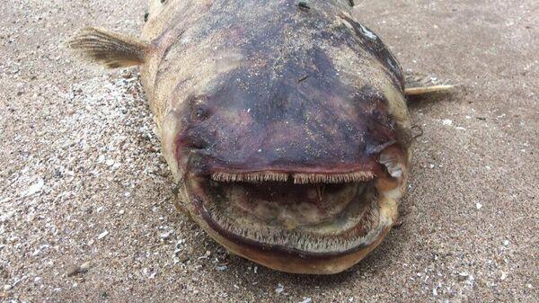 Рыба, выброшенная на берег Куйбышевского водохранилища в Тольятти. 10 августа 2019