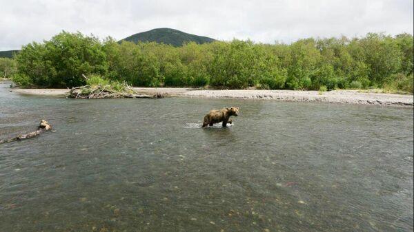 Медведь на популярном туристическом маршруте на реке Хакыцин