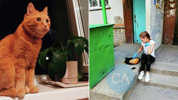 Рыжий кот Мотя