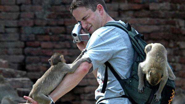 Турист с макаками в Таиланде