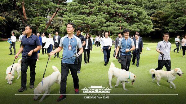 Щенки собак породы пхунсан, подаренных лидером КНДР Ким Чен Ыном президенту Южной Кореи Мун Чжэ Ину