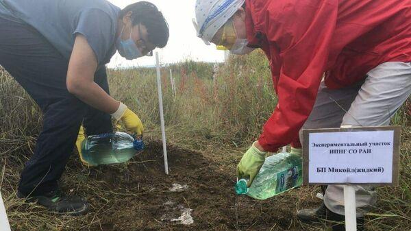 Ученые на экспериментальном участке ИПНГ СО РАН во время работы по исследованию нового вида углеводородокисляющих микроорганизмов.