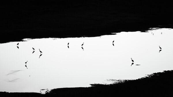 Победитель в номинации Птицы: Юрий Сорокин, В сумерках
