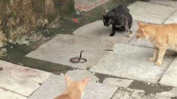 Змея и кошки