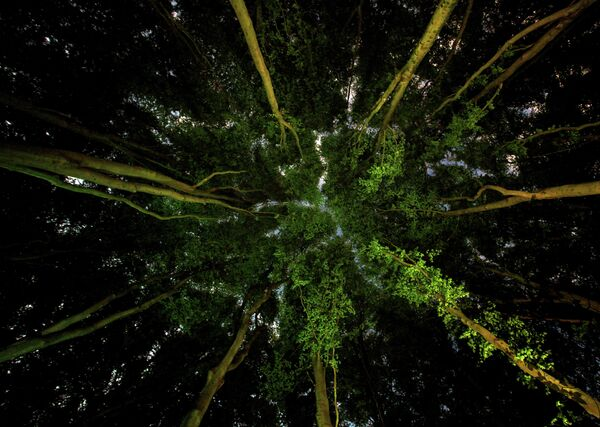 Ian Wade. Работа финалиста конкурса Environmental Photographer of the Year 2019