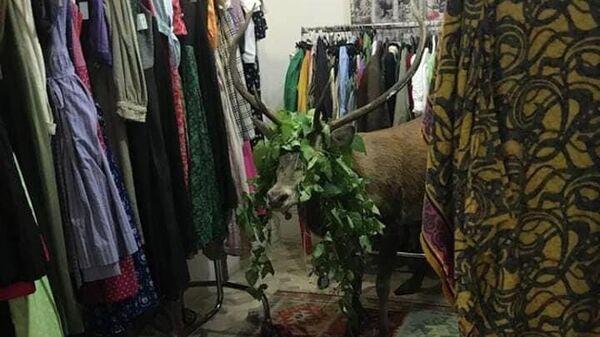 Олень в магазине одежды в городе Кортина-д'Ампеццо, Италия