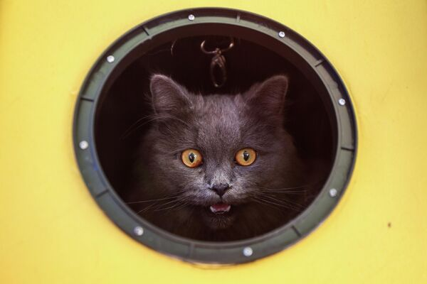 Кошка перед ежегодной церемонии благословения домашних животных