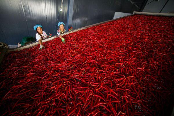 Рабочие сортируют перчики чили на фабрике в Яньчане