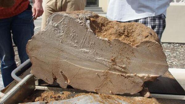 Ископаемые кораллы из Омана возрастом 4100 лет