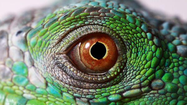 Глаз игуаны