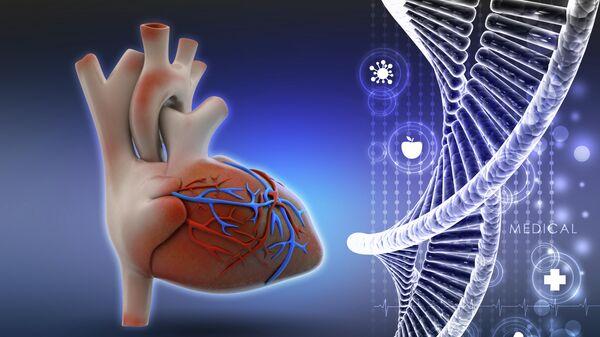 ДНК и человеческое сердце