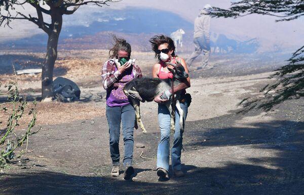 Девушки спасают козу во время природного пожара в Калифорнии