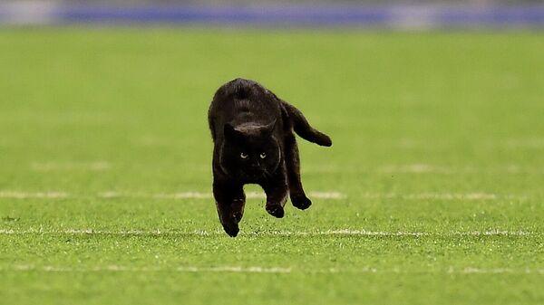 Кот на поле для американского футбола