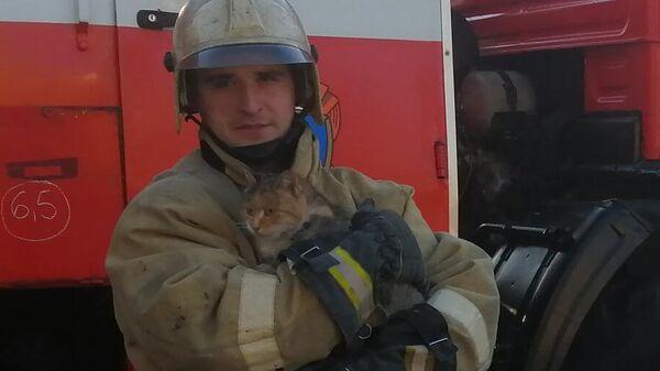 Белгородские спасатели достали упавшую в канализационную траншею кошку. 22 ноября 2019