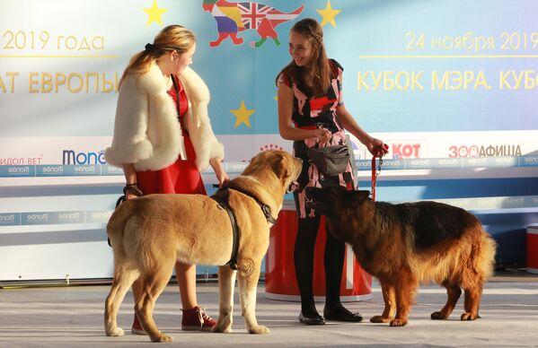 Участники с собаками на международной выставке собак в Москве
