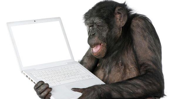 Обезьяна смотрит на экран компьютера