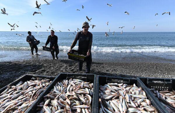 Рыбаки разгружают выловленную в Черном море рыбу