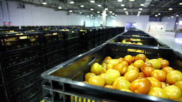 Сортировка и упаковка томатов в тепличном комплексе Ботаника
