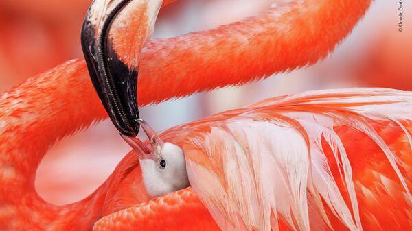 Claudio Contreras Koob. Шортлист Wildlife Photographer of the Year LUMIX People's Choice Award