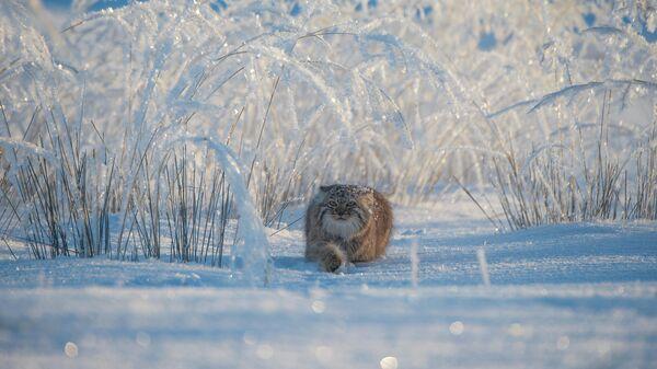 Valeriy Maleev. Шортлист Wildlife Photographer of the Year LUMIX People's Choice Award