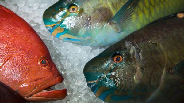 Рыба Групер и рыба-попугай на 24-й Международной выставке продуктов питания WorldFood Moscow в Экспоцентре в Москве