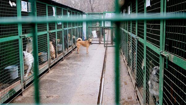 Собаки в вольерах на территории приюта для бездомных животных
