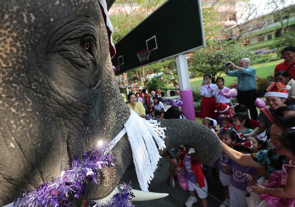 Слон в костюме Санта-Клауса выступает перед детьми во время празднования Рождества в Таиланде