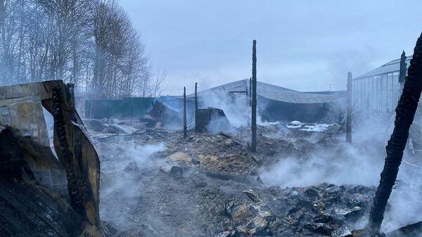 Последствия пожара на территории дачного товарищества в Раменском районе