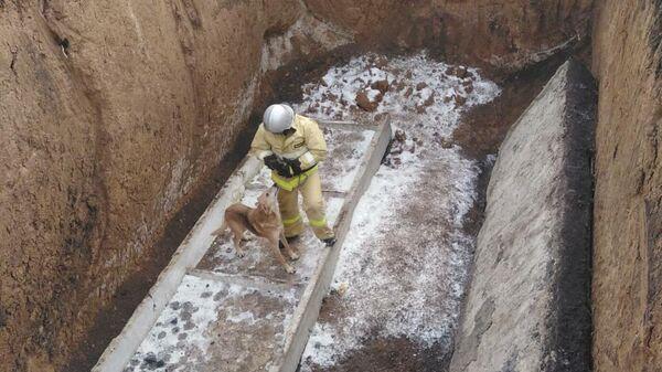 Сотрудник МЧС достает упавшую в котлован собаку в поселке Вейделевка Белгородской области
