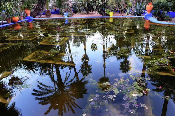 Пруд в саду Мажорель в Марракеше