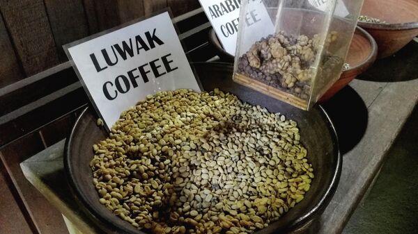 Бали. Лювак называют самым дорогим кофе в мире