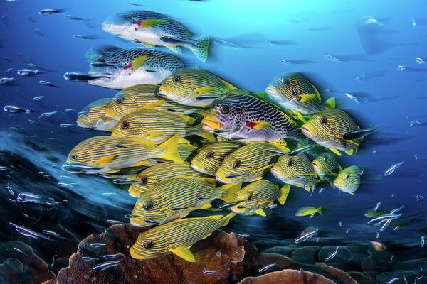 Nicholas More. Работа победителя конкурса 2019 Ocean Art Underwater Photo Competition