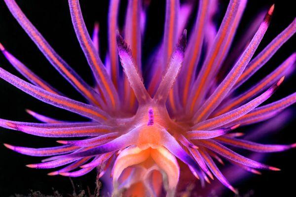 Jenny Stock. Работа победителя конкурса 2019 Ocean Art Underwater Photo Competition