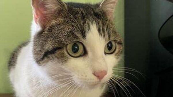 Фотография кошки, выставленной на продажу на сайте Avito за 20 миллионов рублей