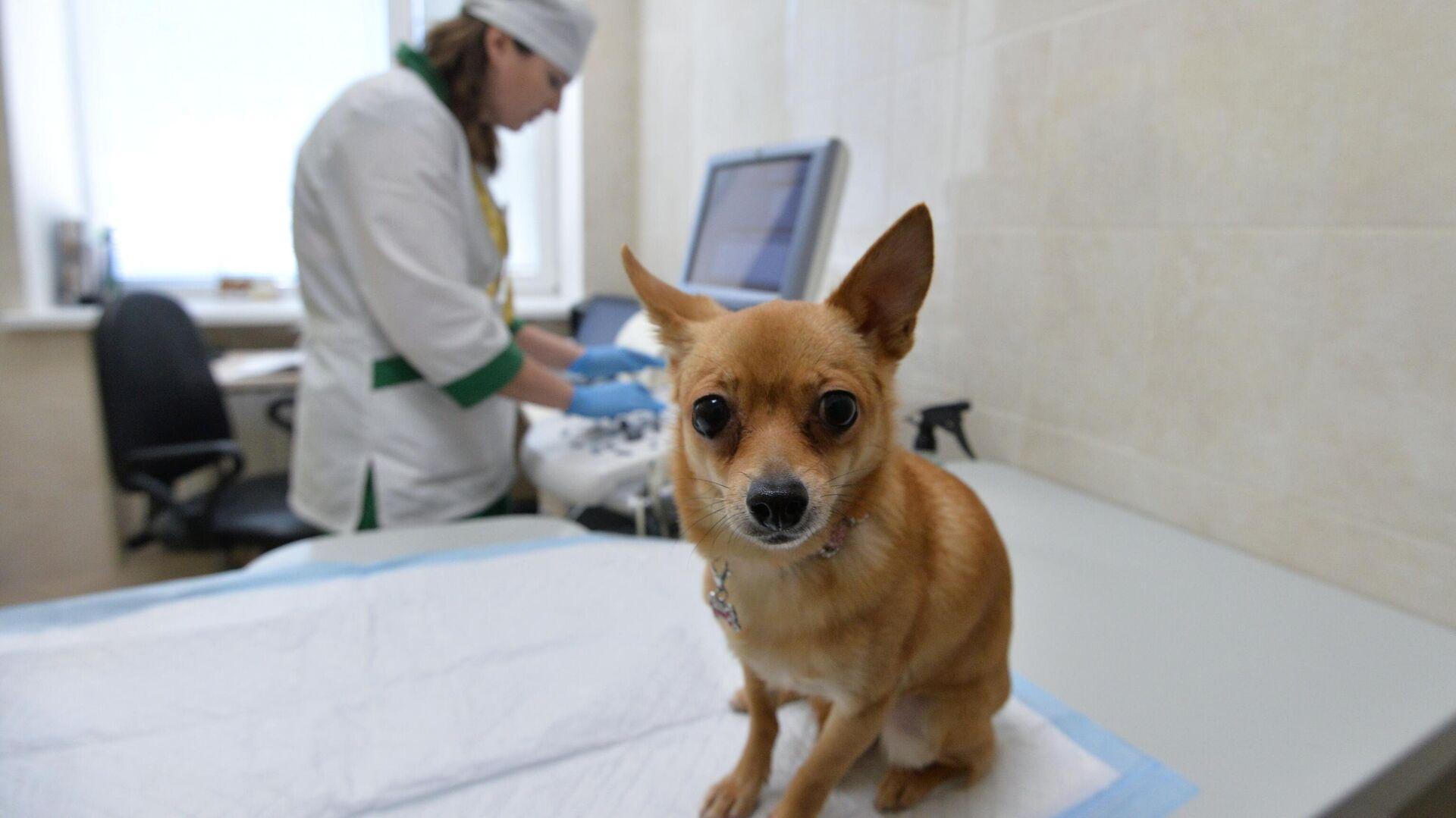 Собака перед осмотром в Челябинской ветеринарной станции - РИА Новости, 1920, 30.04.2021