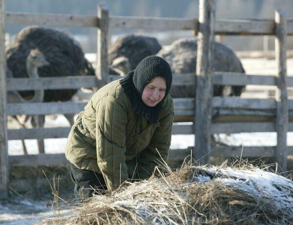 На подворье женского монастыря Святой Елисаветы выращивают страусов