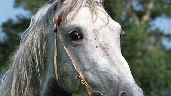 Партнёром Дизена в этом спектакле стал конь
