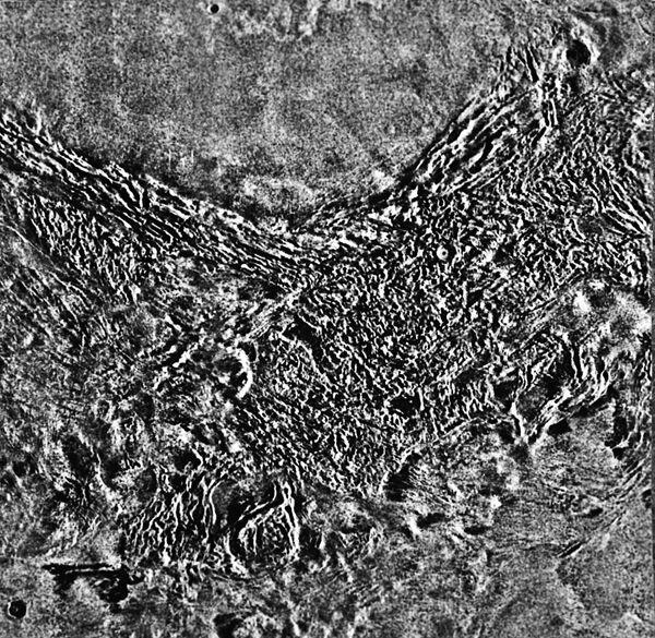 Земные циклоны помогут объяснить природу вихрей в атмосфере Венеры