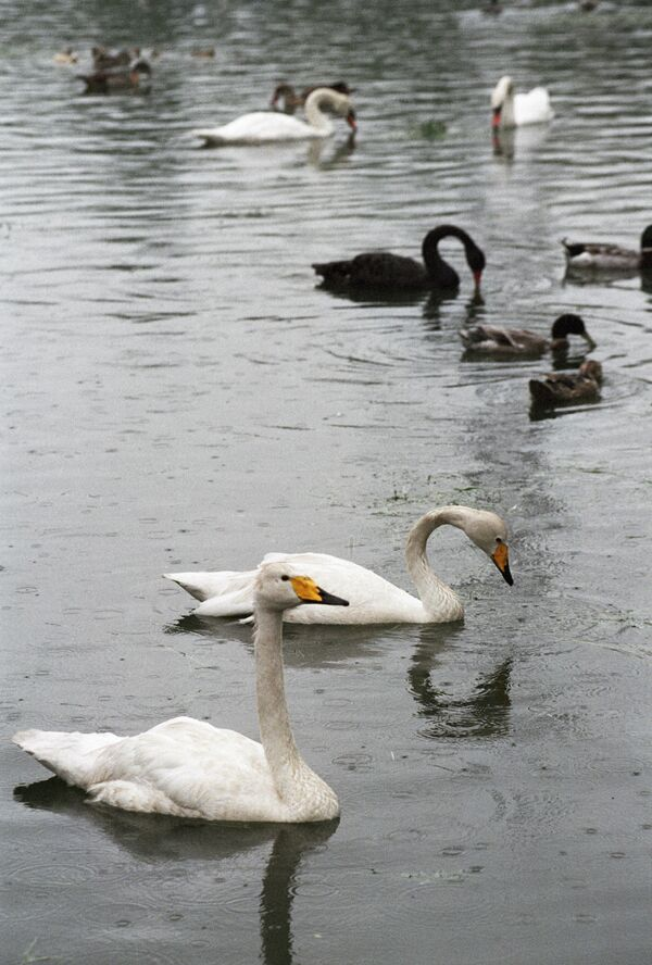 Международный день птиц. Справка