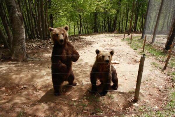 Экологи предупреждают жителей Баварии о возможном появлении медведей