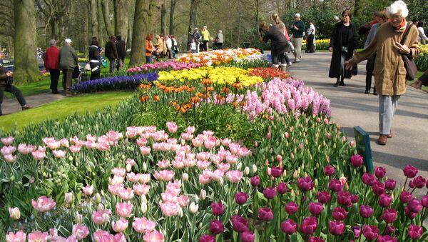 Цветочный парк в Нидерландах. Архивное фото